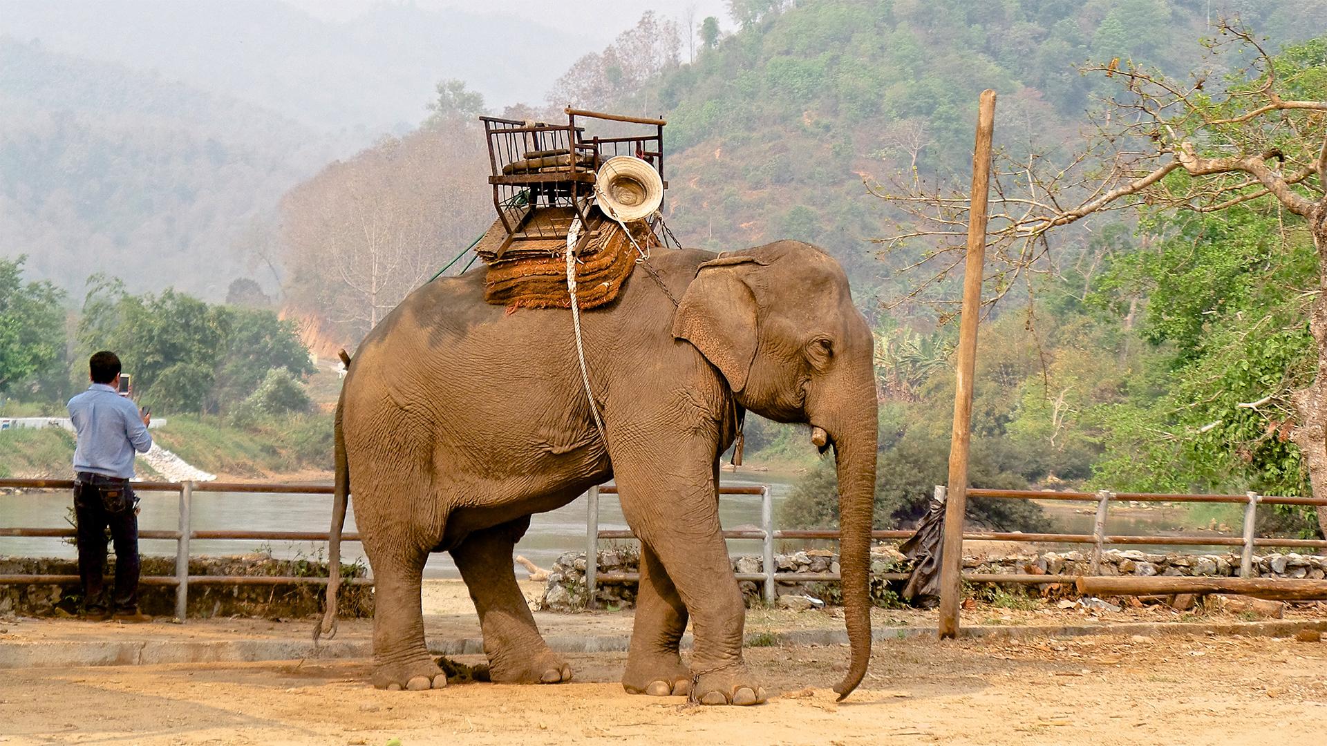 Elephant camp nel nord della Thailandia